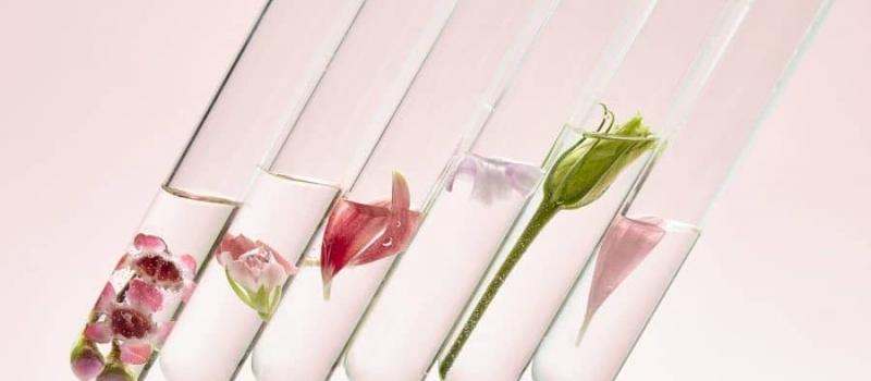 fleurs-et-science-001